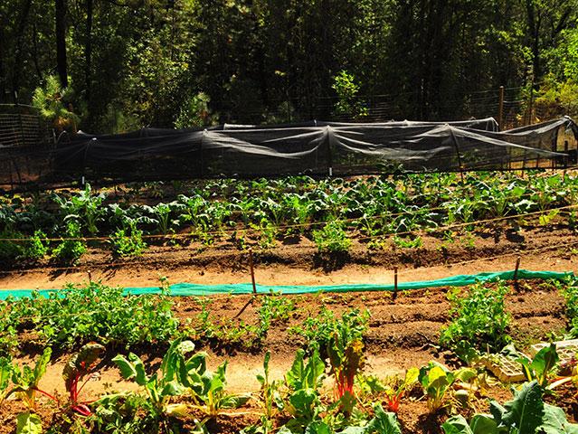 Harmony Hill-row crops