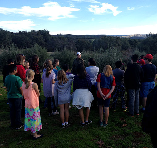 Plymouth Elementary 5th graders visit Hundred Acre Olive Farm