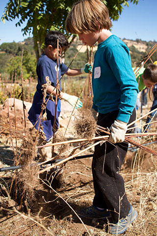 Sutter Creek Elementary students help on the farm