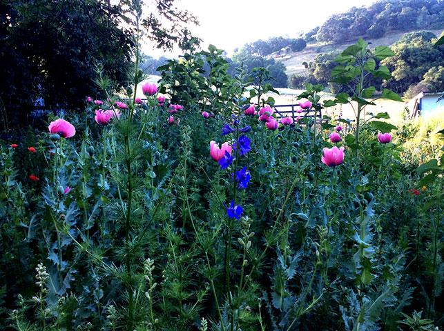 Tin Bird flower beds